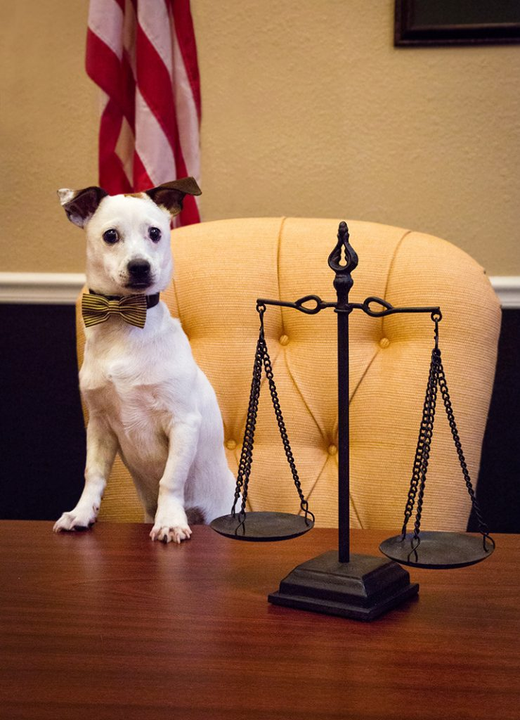 dog in law office